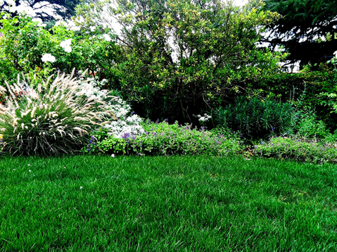 Gingrich-lawn-care