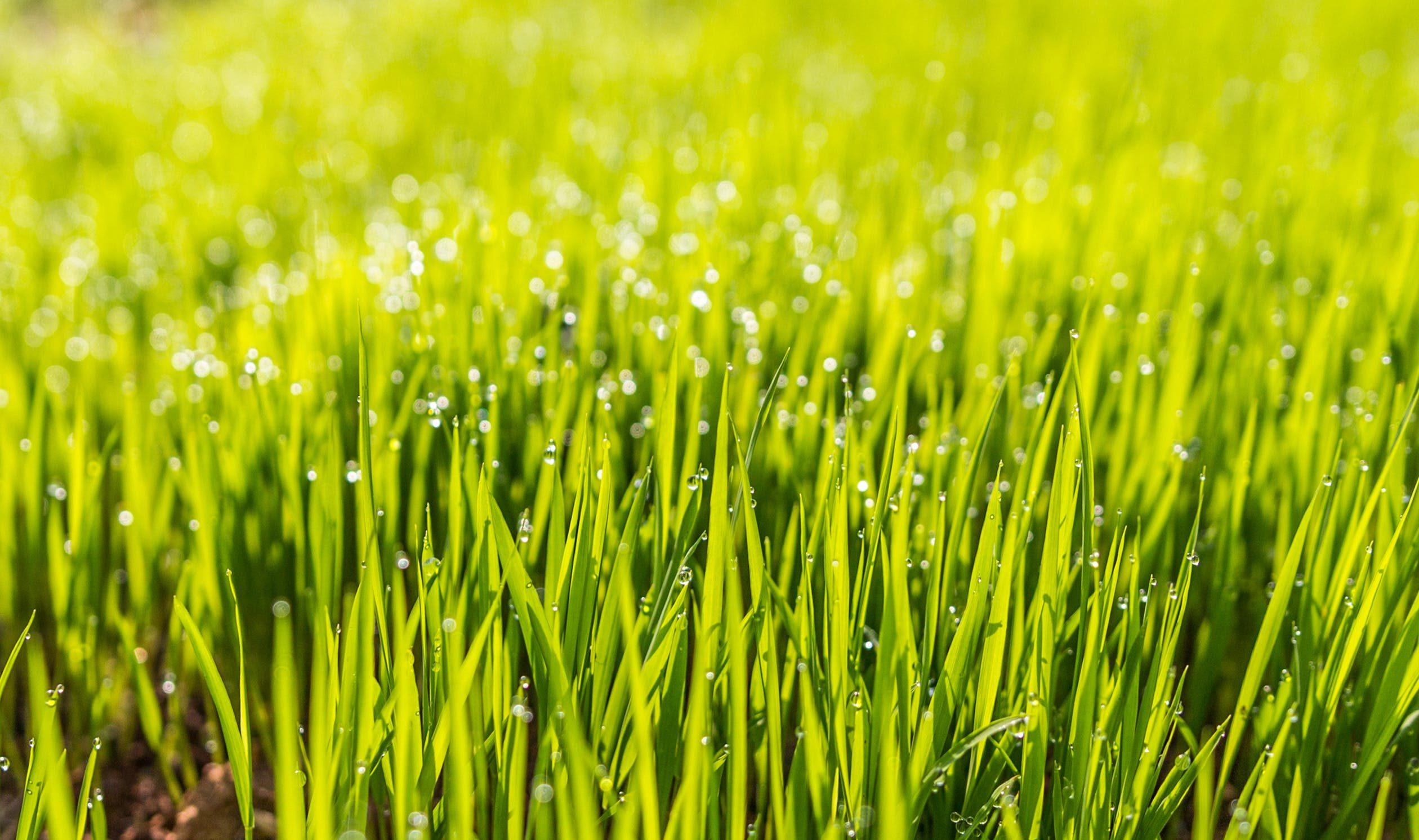grub blog post_ lawn2