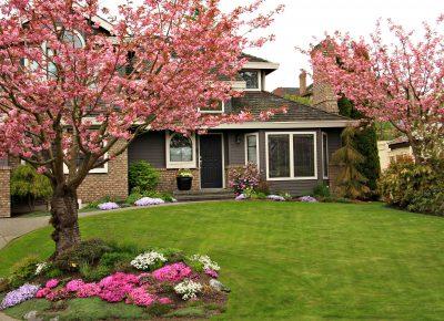 Tree Shrub Ground Cover Care